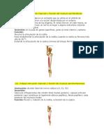 Grupo Miologia y Angio