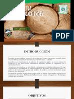 diapos Madera.pdf
