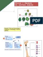 Clase 2 Celulas y Organos Del Sistema Inmunitario