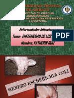 11. Escherichia Coli
