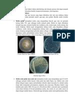 media bakteri
