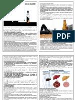 Graves Efectos Que Causa El Alcohol en El Organismo