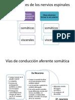 Exposición de vias ascendentes.pdf