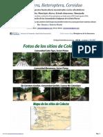 854 Venezuela-coreidae Del Amazonas