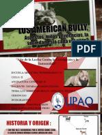 american bullys