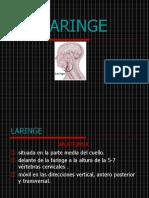 LARINGE (2)