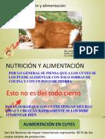 Alimentacion en Cuyes.