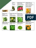 plantas conocidas