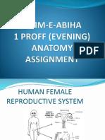 anatomy assignment.pptx
