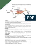 Sistema Digestivo de Los Equinos