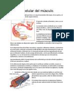 Biología Celular y Molecular Del Musculo