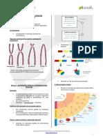 estudo-citogenetica-v04.pdf