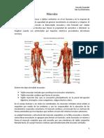 Músculos y Contracciones