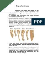 Órgãos homólogos e fósseis.pdf
