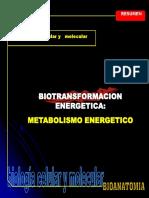 Semi 4 - 3--Biotransferencia Energetica