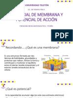 Potencial de Membrana y Acción