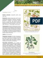 zarzaparrilla.pdf