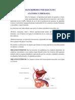 Anatomia y Fisiologia de Organos Reproductores.