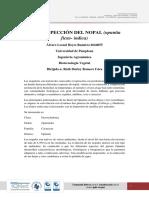 Bioprospección Nopal (1)