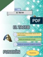Terminologías del Tacto