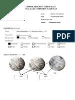 laporan petrografi c8