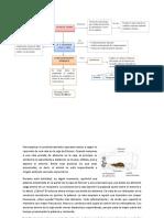 Conductismo Operante - b.f. Skinner