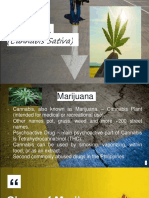 Marijuana and Treatment of Drug Addiction in the Philippines - Nathaniel Dela Cruz