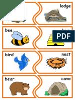 Animais e insetos em inglês