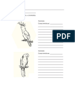 Cuaderno de Observación 2 ciclo primaria