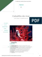 El Caballito de Mar o Hipocampos _ Aquarium Costa de Almería