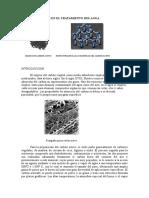 Carbon Activo-Isoterma Freunlich