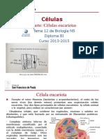 GTP_T12 .Células (3ªParte_Células Eucariotas) 2013-15