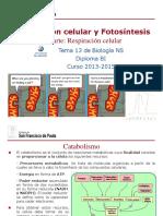 GTP_T13. Respiración Celular y Fotosíntesis (2ªParte_Respiración Celular) 2013-15