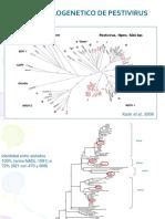 Cambios Genomicos en Pestivirus
