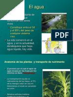 TRANSPORTE DE NUTRIENTES EN LAS PLANTAS.ppt