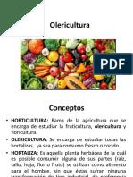 Olericultura.pptx