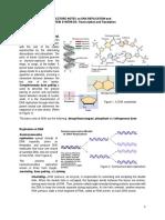 dna-replication.pdf