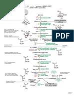 Glycolysis Schematic 2010