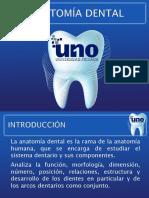 3 Anatomía Dental