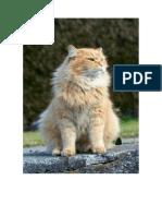 gato_orgulhoso_emoções.docx