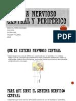 Sistema nervioso central y periférico.pptx