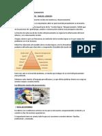 NIVELES LOGICOS DEL PENSAMIENTO.doc