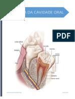 Sebenta de Histoligia Oral I