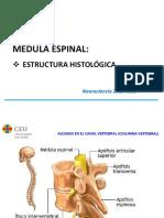 Nh2 Histología de La Médula Espinal