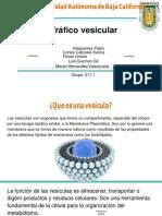 Trafico Vesicular 170318021126 (1) Convertido