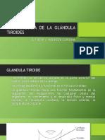 Farmacología de La Glándula Tiroides
