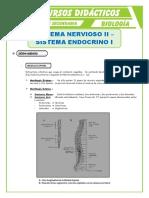 sistema nervio y endocrino, resumen
