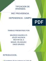 IDENTIFICACION DE ARVENSES.pptx