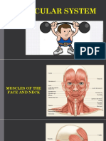 08 Muscular System Lab