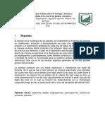 Informe de La Práctica de Laboratorio de Biología y Botánica, RAIZ